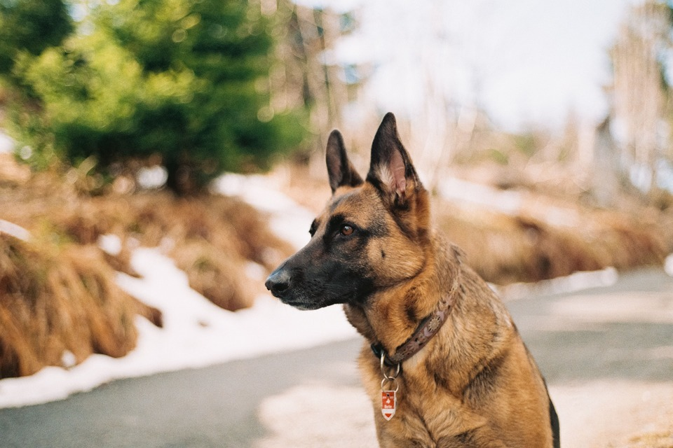 An image of a security dog sitting down at a site.